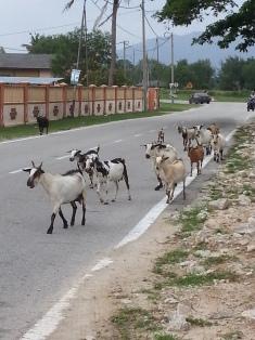 Goats Tg Lumpur 07